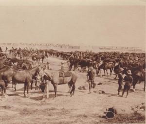 Chatby Camp Alexandria April 1915